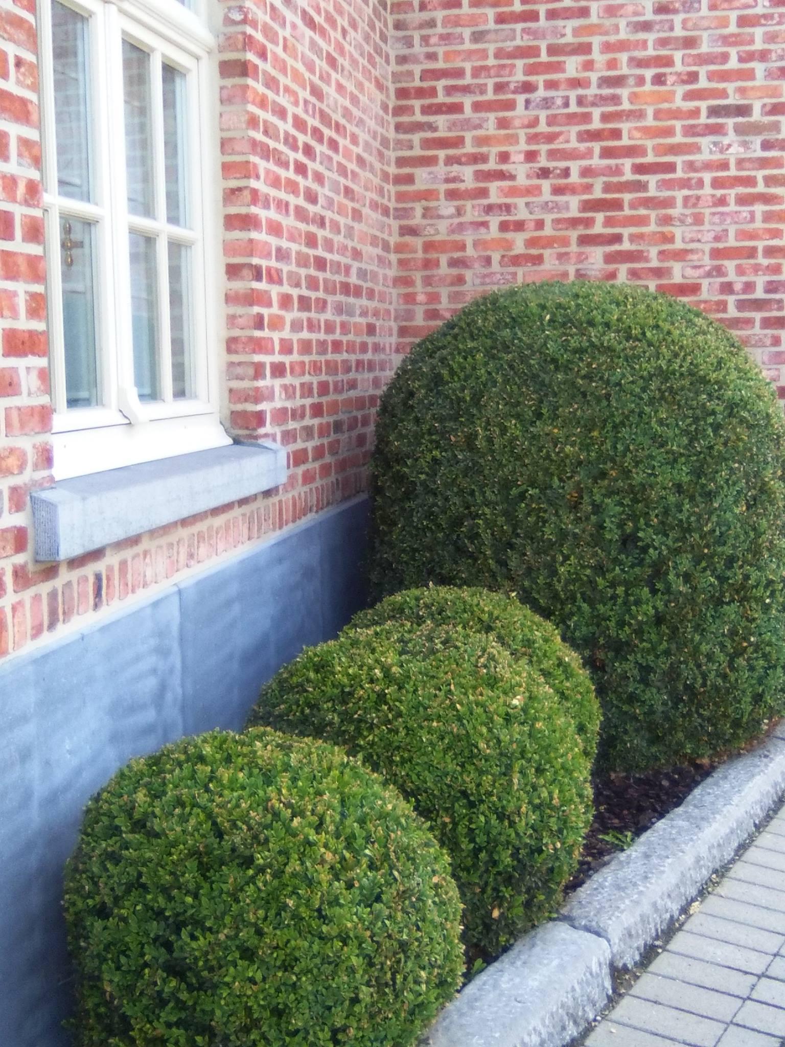 Hof der Heerlijckheid - outdoor buxus