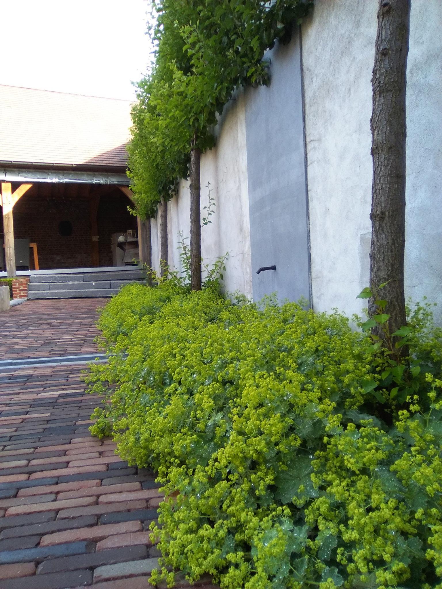 Hof der Heerlijckheid - outdoor pad naar buitenkamer