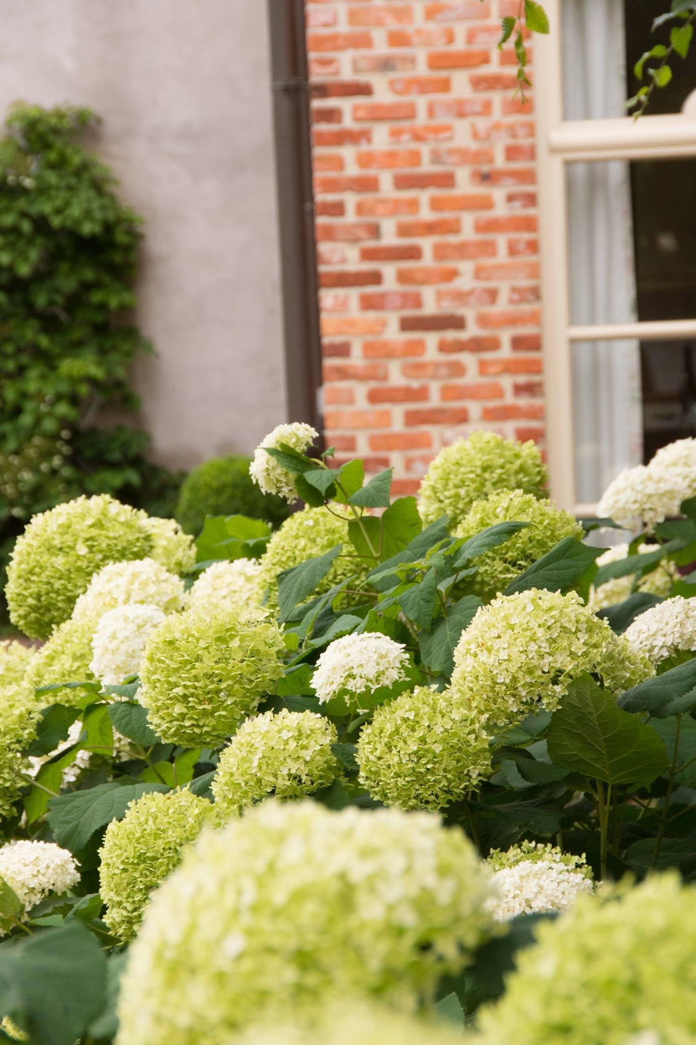 Hof der Heerlijckheid - outdoor planten